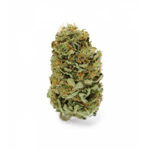 amnesia haze cannabis